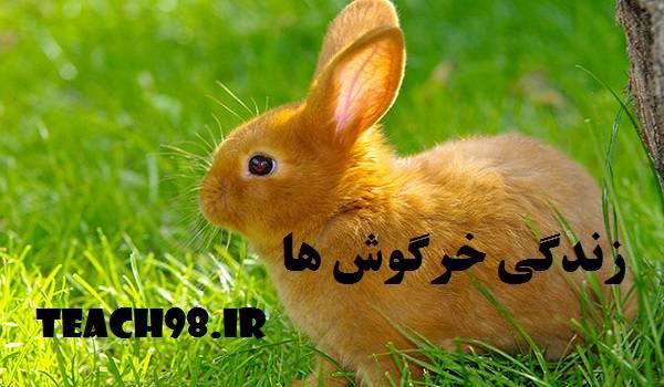 پاورپوینت زندگی خرگوش ها-اول دبستان